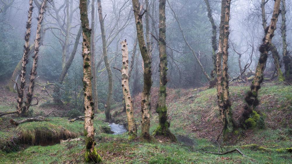 Forsaken Woodland