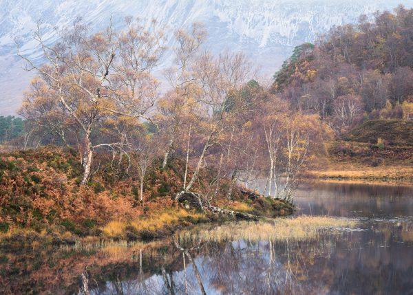 Mountain Birch, Scotland