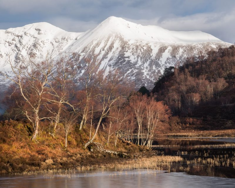 Torridon Birch and Mountains in March