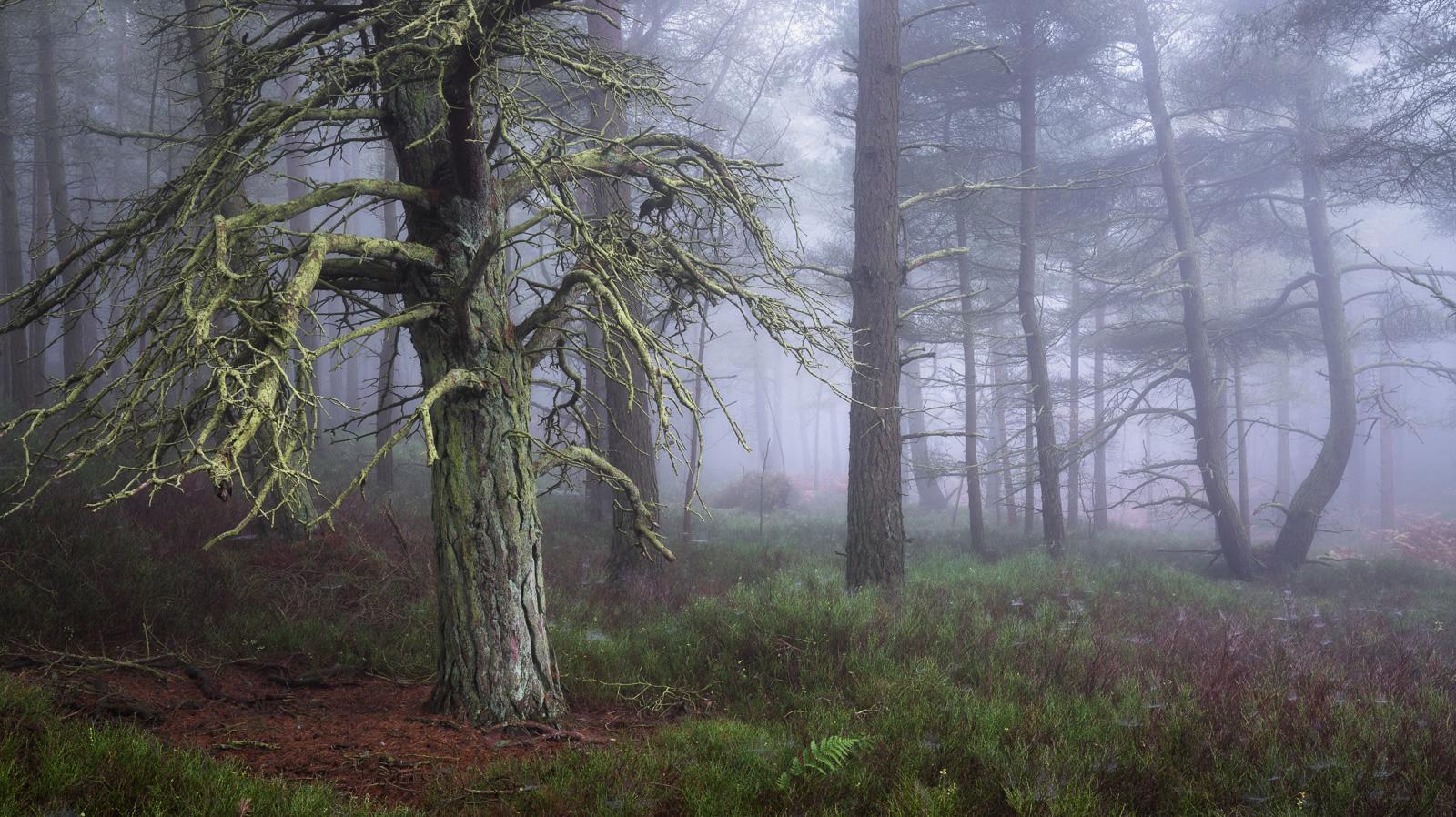Treebeard, LOTR