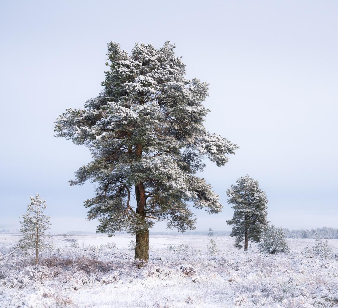Winter Woodland Edge by Simon Baxter