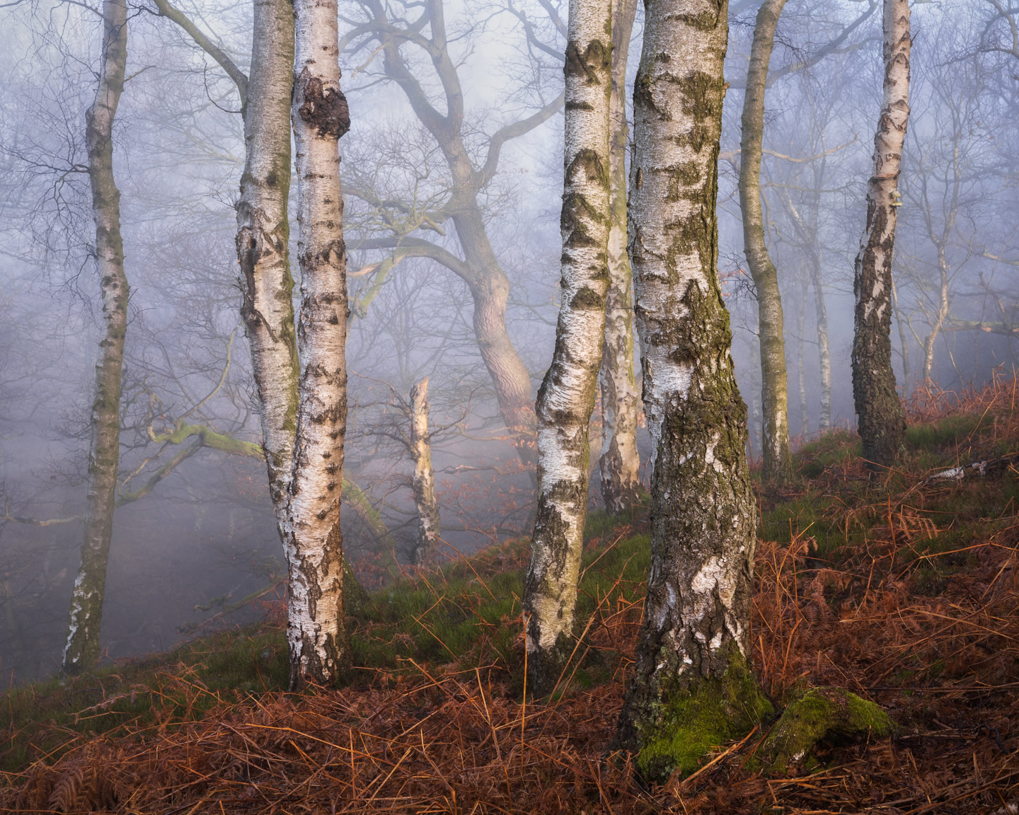 Above The Beck - Woodland Photography by Simon Baxter