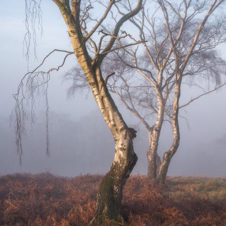 Fauno - woodland photography by Simon Baxter
