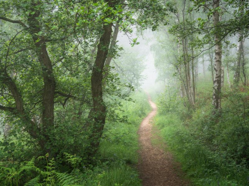 Park Wood Path