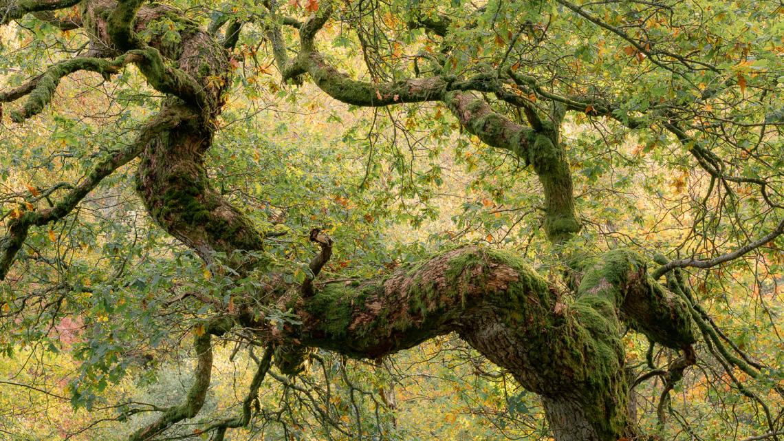 Early autumn oak palette