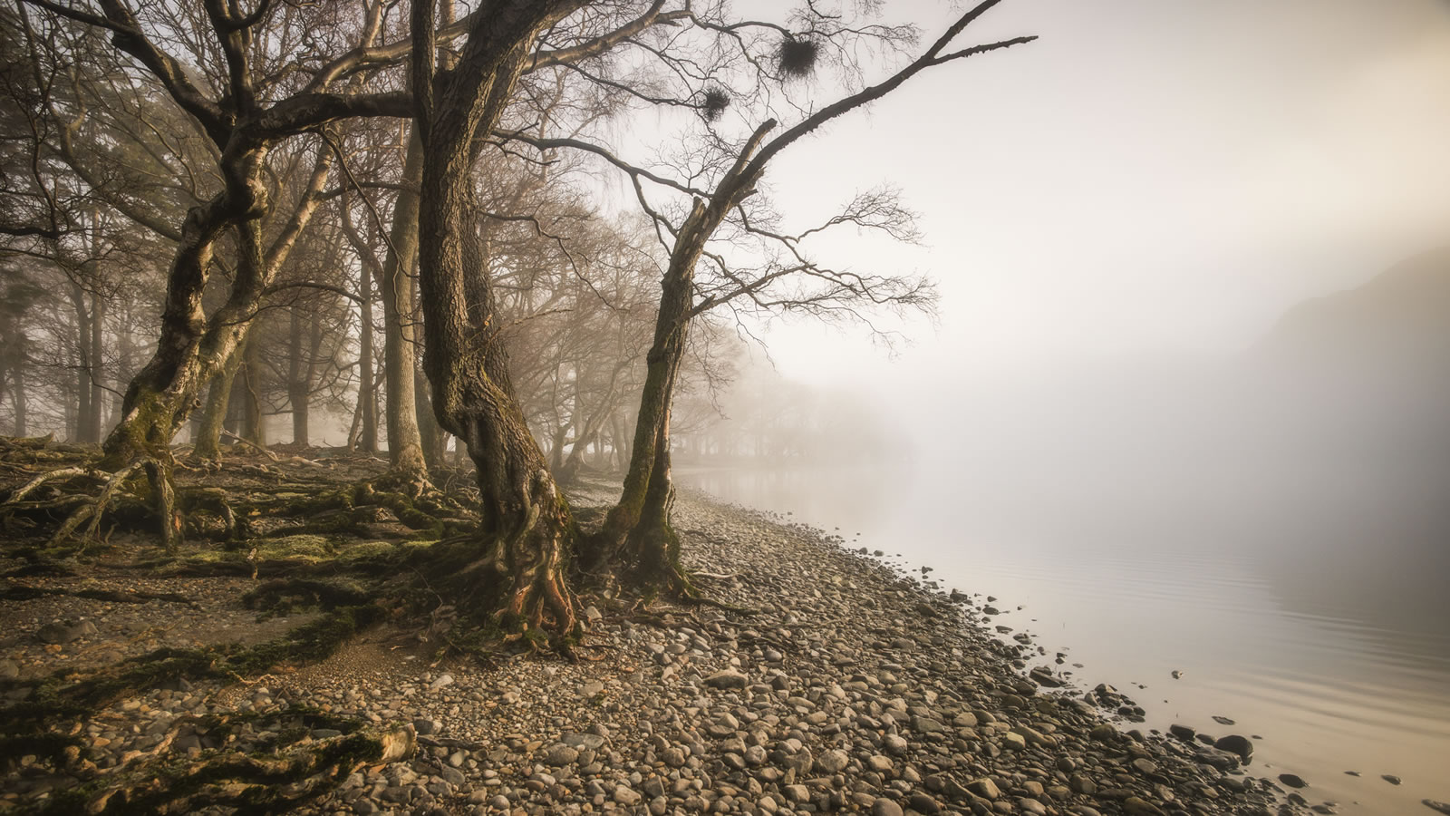 The Distance by Mark Littlejohn
