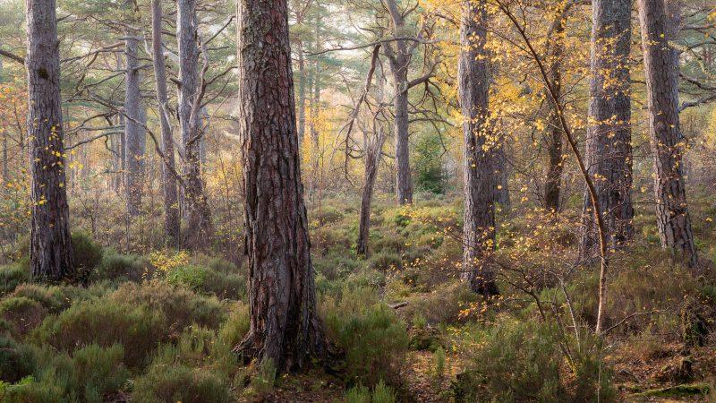 Flecks of Autumn