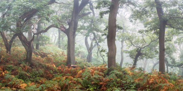 Local woodland scene