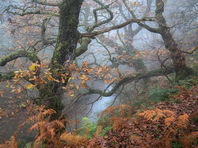 Quiet Quercus